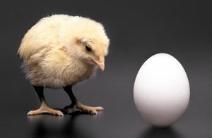 困扰人们的经典问题,先有鸡还是先有蛋?可能我们都想错了