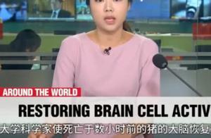 """""""死亡""""被重新定义,科学家成功复活死亡猪脑,存活长达36小时"""