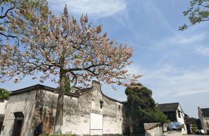 南浔古镇:粉墙黛瓦,清水绕青城。