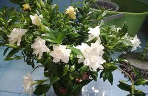 在家中养殖这几种植物,让香气飘满整个房间!