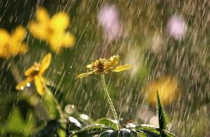 关于水墨的好词好句 描写风雨的好词好句
