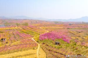 最美人间四月天,蜜桃之乡山东蒙阴百里桃花盛开