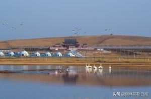 美爆了!锡林郭勒有片天鹅与狼共舞的天边草原
