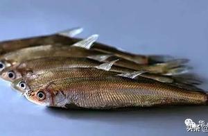 我们常吃的多春鱼,它可不是一种鱼,而是三种鱼,这下你知道了吧