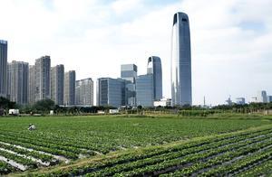 需要逃离城市,才能归隐田园?这个农场就在你办公室边上——街访