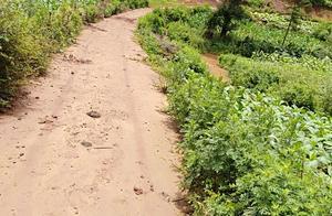 曲靖师宗县农村300亩水浇地出租,土地快荒芜了,家里就老人在家