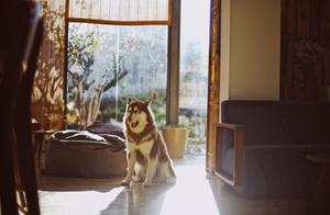 藏在束河古镇里的北欧风民宿,喝着茶摸着狗,还能看玉龙雪山日出