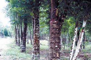 汇生林业投资周期会不会很长