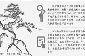 """泰山首次发现""""松树癌症"""",威胁600多万亩松林"""