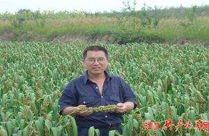 """章彦俊:在非洲种谷子的""""中国好人"""""""