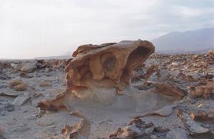 科学家发现2.2亿年前恐龙墓,约有10只恐龙的化石!