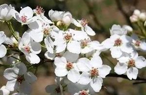 春风十里不如你,三里桃花不及卿