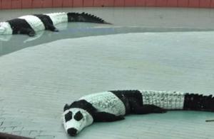 """印度人又再次""""开挂""""?跟中国租借熊猫遭拒后,想出了这个办法!"""