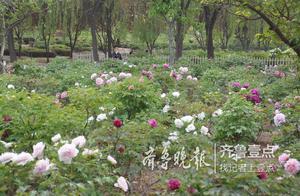曹州牡丹园:为游客带来前所未有的繁花盛世