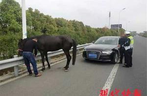 江苏一男子开着奥迪遛马 网友:考虑过马的感受吗?