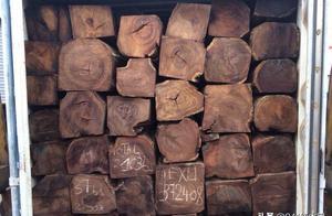 这些红木原材的价格了解一下