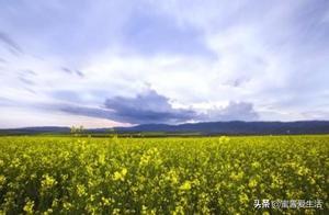 在新疆伊犁养蜜蜂二十多年主要采得三种蜂蜜来源,你了解多少?