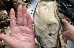 日本福岛核泄漏后是什么样子的? 来看一组真实的照片!