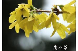 春雨像绢丝一般, 树叶上,花瓣上都有一颗颗晶莹剔透的小水珠,