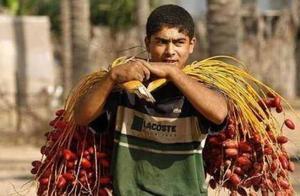 迪拜土豪最喜爱的水果,有钱人抢着买,穷人却看不上