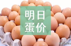 明日(4月24日)鸡蛋价格预测