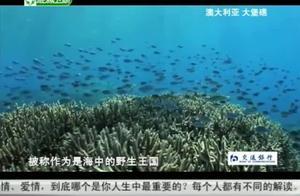"""澳大利亚的大堡礁,有1500多种鱼类,还有动画片中的""""尼莫鱼"""""""
