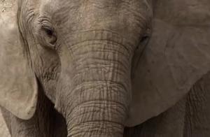 动物世界,看动物生活的日常百态,带你打开新世界的大门