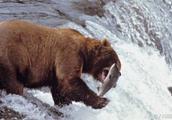 最熊股诞生:连续17个一字跌停板 不是退市股胜似退市股