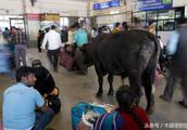 同是人口大国 看看中国的火车站 再看看印度 差距不是一般的大