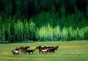 新疆自驾旅游线路