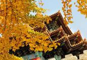 西安不属于四大古城、佛山属于四大古镇,中国古城、古镇知道吗?