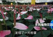 北京哪里卖花盆