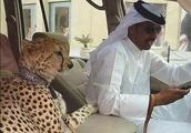 迪拜土豪平日吃的冰淇淋,16万元一个,用金勺子吃,比钻石般金贵