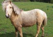 如此可爱的动物,74岁的他居然兽性大发性侵得逞!