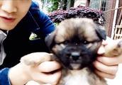 主人用视频记录狗狗旺财从捉回来第一天到现在,看哭了!