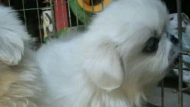 北京宠物狗店 北京最大的宠物店在哪