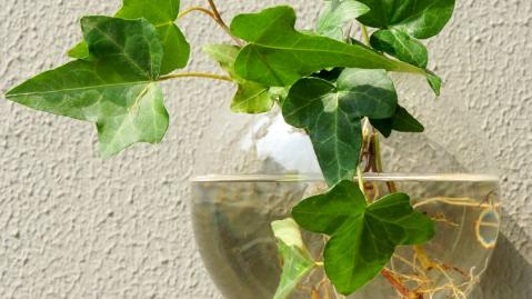 陆生植物和水生植物的区别