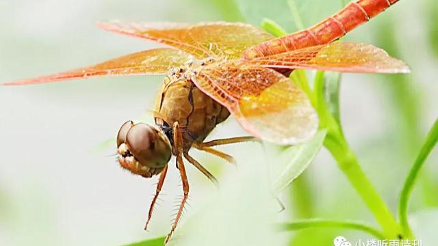 描写秋天的蜻蜓的诗句