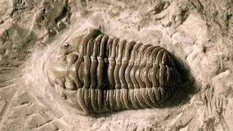 陕西出土的龙骨化石有什么价值