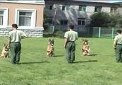 训练阿富汗猎犬