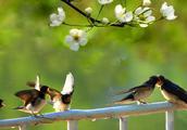 怎样区分古诗词中的燕雁
