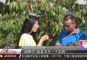 车厘子适合在云南昆明种植吗?