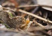 白蚁飞上15楼,一小区公共区域出现白蚁无人管!梅雨季节将迎来白蚁高发期的最高峰