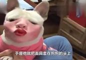 主人给狗带上嘴套,当狗抬起头的那刻,网友们纷纷笑喷:这啥玩意