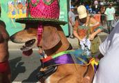 巴西里约热内卢,狗狗们盛装打扮,参加举行狂欢节宠物大游行