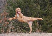 """动物界也有""""瑜伽高手""""第六个动作你不得不服!"""