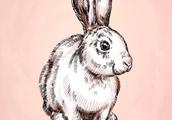 2月(大金兔)要在元宵节前后