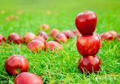 苹果价格创十年新高 苹果期货作用显现