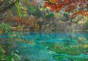 五花海,九寨沟里最漂亮的地方,带你进入一个色彩斑斓的世界