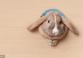 生肖兔,未来几天福运青云直上,不接不行!